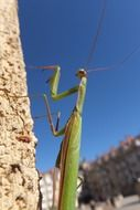 praying mantis insect summer portrait