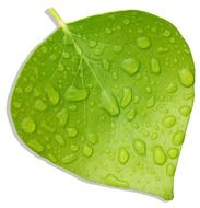bright green leaf in drops of water
