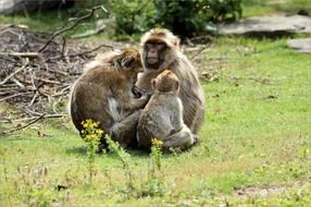 monkey family animal wildlife