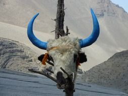 animal skull with blue horns
