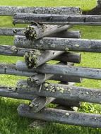 wooden fence covered with moss