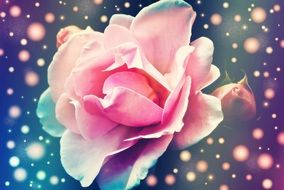 beautiful wallpaper with pink rose