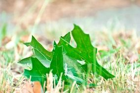 green leaves on dry grass