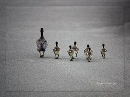ducks family on a road