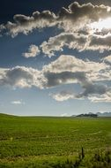 Green pasture under a blue sky with white clouds