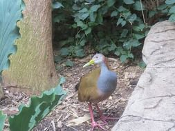 giant wood rail in a wildlife park