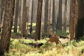wild deer in the forest on a summer day