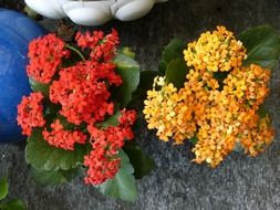 A lot of the beautiful orange and red flowers