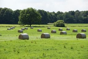 straw bales on the green field