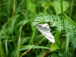 White butterfly on the green grass