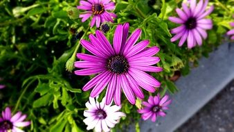 environment purple nature flower