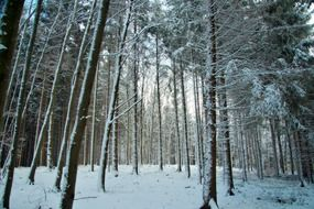 snowy forest in bavaria