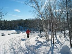 winter landscape in acadia national park maine