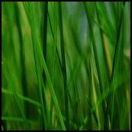 grass stone reed plant nature
