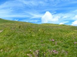 Grass on the meadow on the mountain