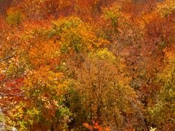 Photo of an autumn forest