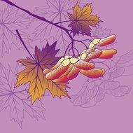 drawn seeds on a maple branch on a purple background