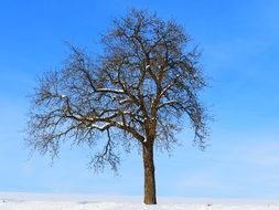 lonely tree on a winter field