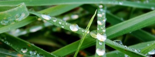 Close-up of the raindrop on the green grass