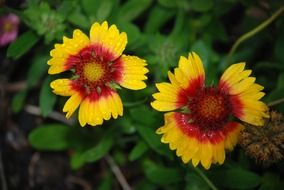 yellow red flowers after rain