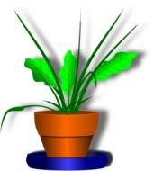 Green plant in the pot clipart