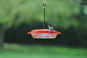 very beautiful hummingbird bird