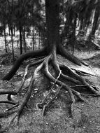 black and white photo of a tree root