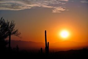 sunrise over the desert with cacti in arizona