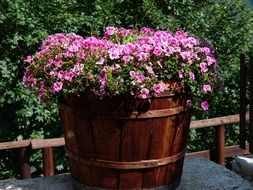 Pink flowers in container