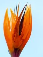 colorful bird of paradise flower