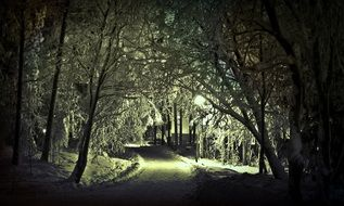 trail in the winter forest at night