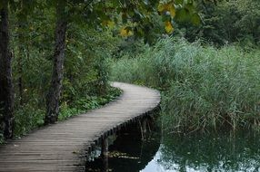 wooden bridge over a small river in a green forest