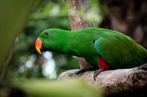 green parrot on a tree branch in a rainforest