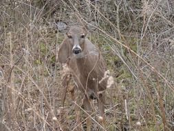 white tailed deer animal in woods