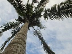 bottom view of coconut tree