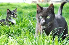 two black kittens on green grass