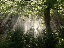 the sun\'s rays through the dense forest