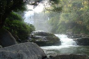 foamy stream on rocks in tropical forest