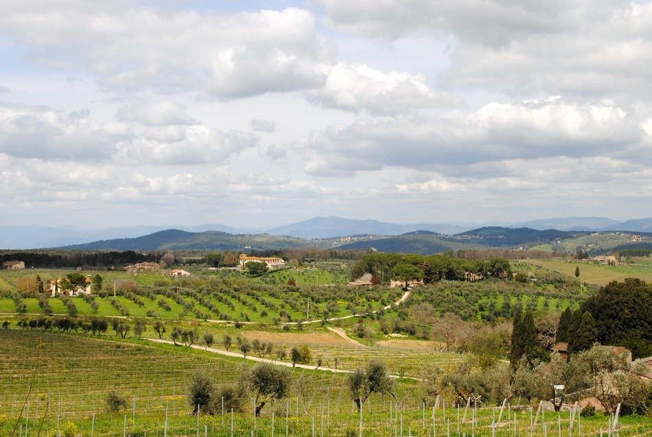 tuscany vineyards at spring landscape, italy, chianti