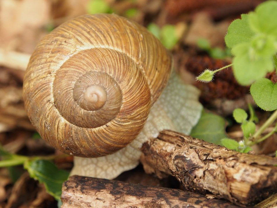 brown snail in forest