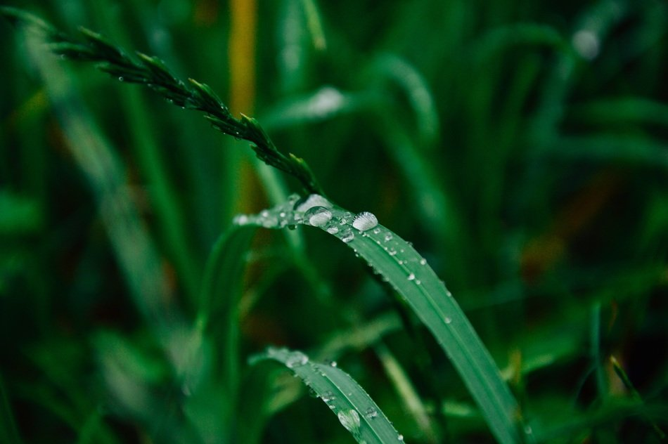 water drops on green plants