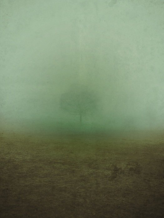 tree in dense fog