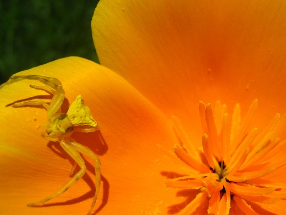 spider on a bright yellow flower close-up