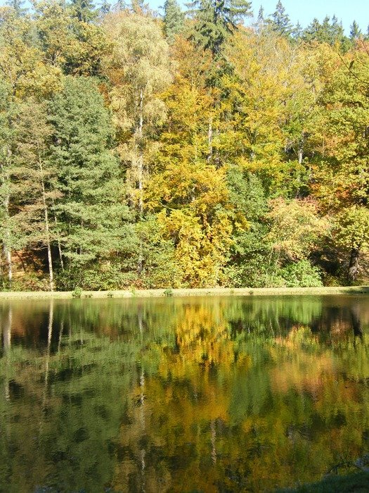 a mirror image of an autumn forest in the water