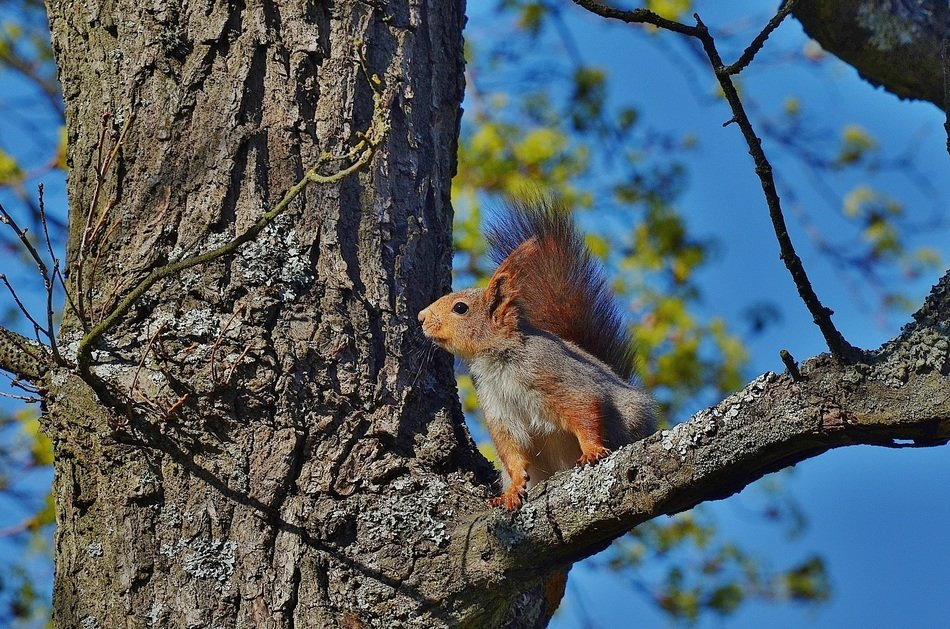 squirrel on a bare tree branch