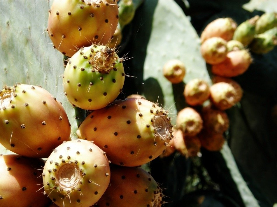 prickly fruits closeup