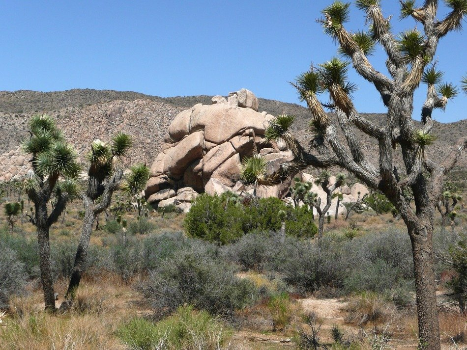 Yucca National Park is a tourist attraction California