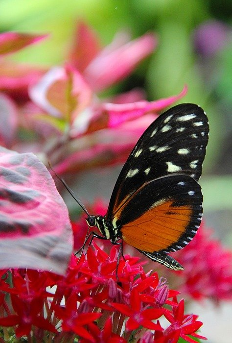 wild butterfly on the red garden flower