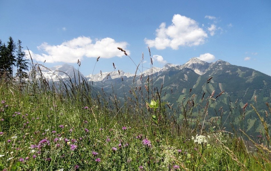 blooming wild meadow on a background of a mountain in Upper Austria