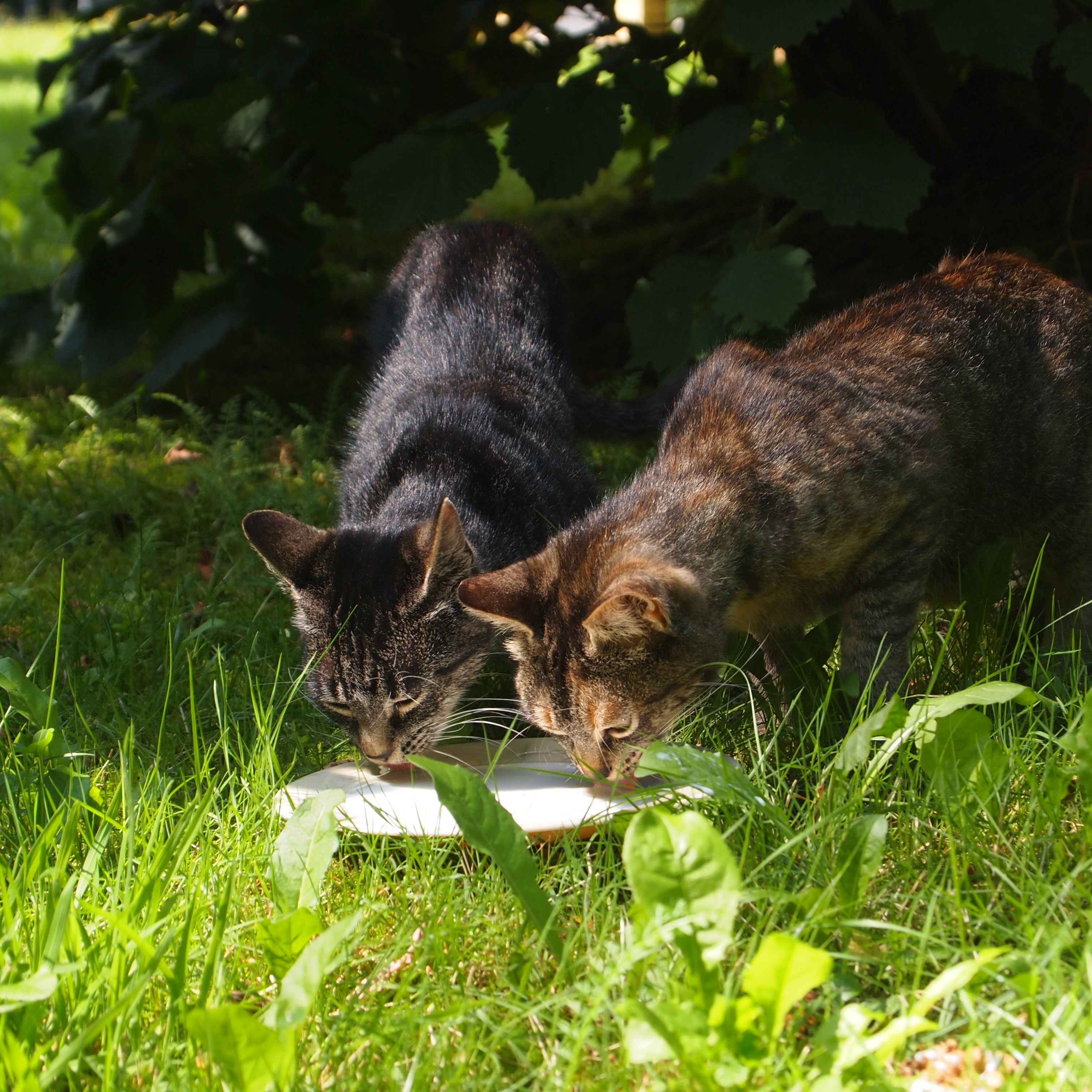 how to get rid of cats in the garden uk